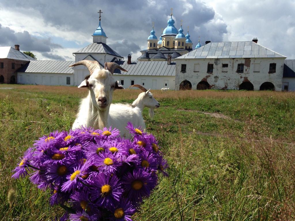 Коневский монастырь готов принять желающих на проживание для ухода за животными на хоздворе